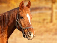 ​Is Magnesium Safe for My Horse?