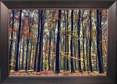 Nature's Palette Picture