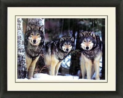 Wolves (Triple Mat)