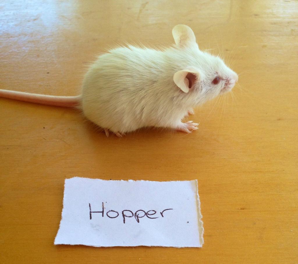 Frozen Hopper Mice - 10 pack