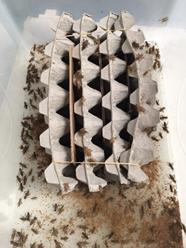 Unpacking your bulk crickets