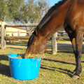 As Extra Large Tubtrugs are food grade safe, they make the best horse feeders.