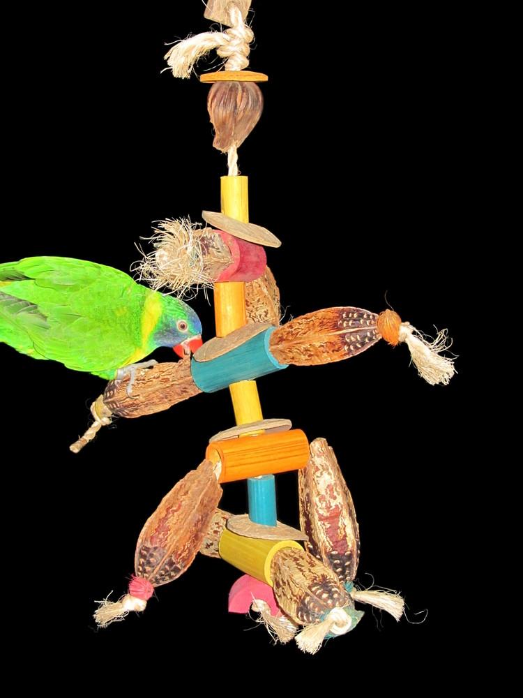 Mahogany Ant