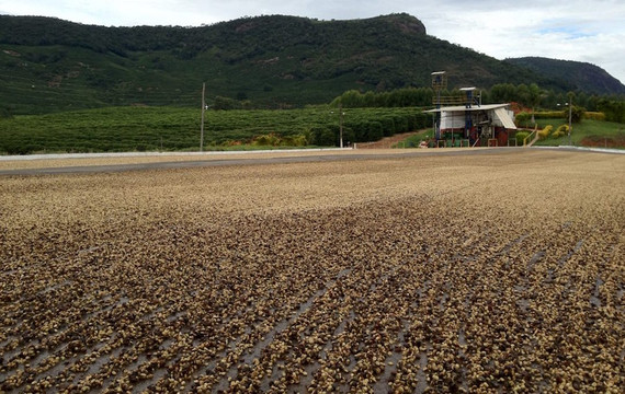 Coffee Processing and What it Means for Your Morning Cup