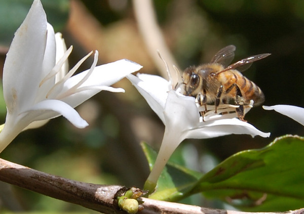 The Buzz on Coffee Production