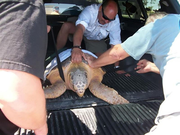 Adopt a Stranded Turtle