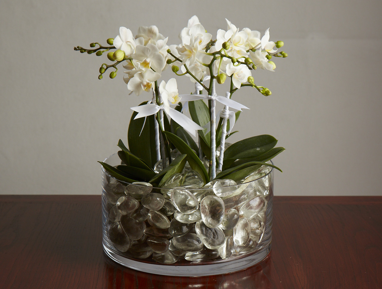 mini orchid plants packer new york city