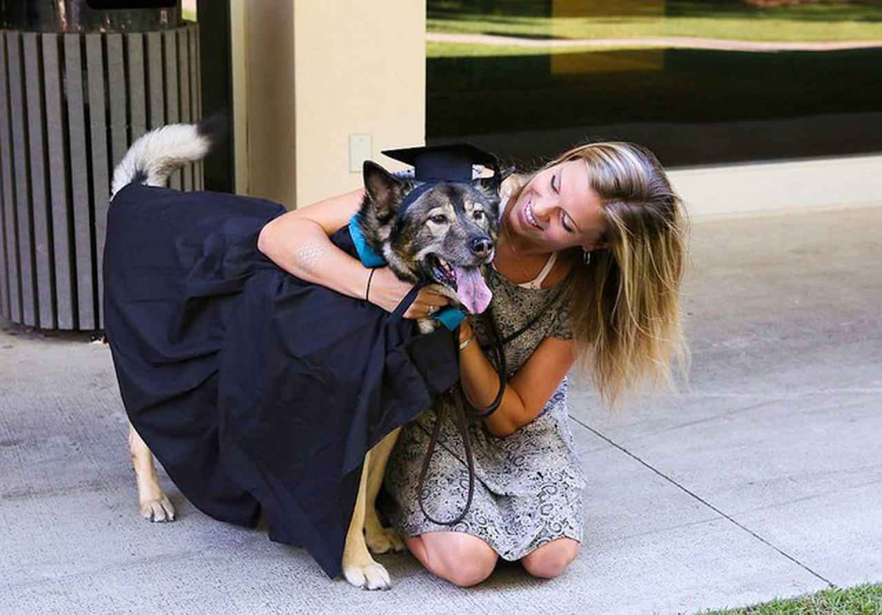 Animal house? More colleges are saying yes to dogs and cats in dorms.