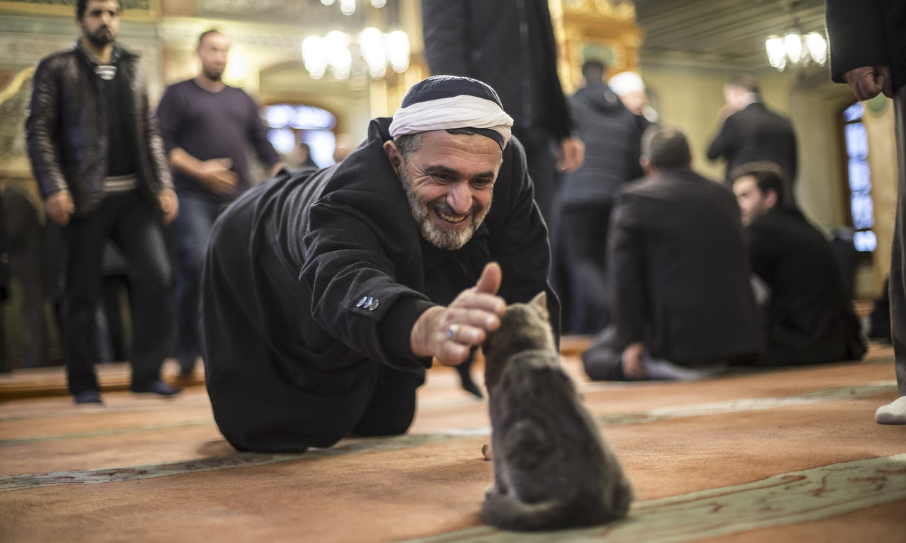 Turkey: where pampered cats are top dog