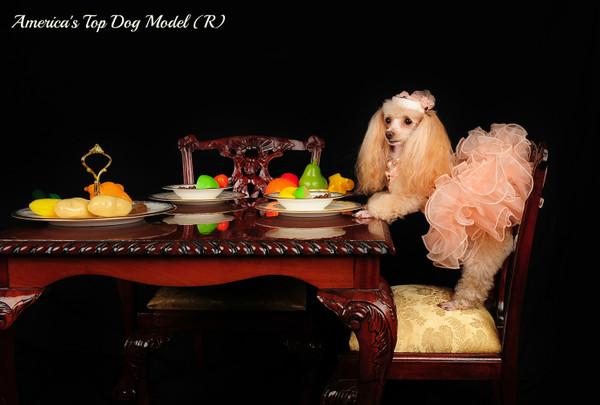 America's Top Dog Model (R) 2015 Contest
