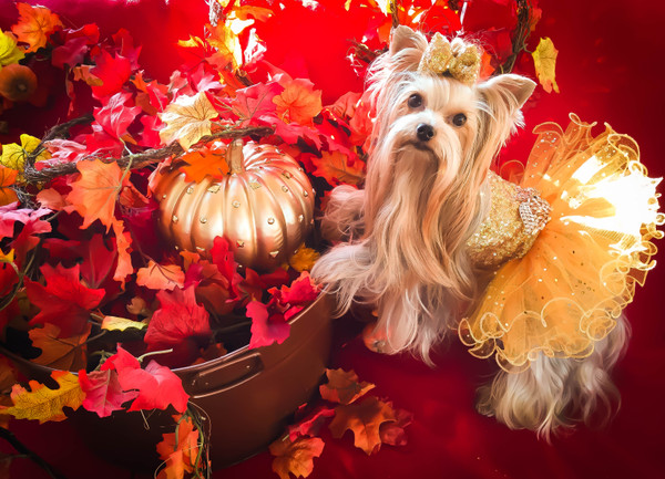 Thanksgiving for Dogs