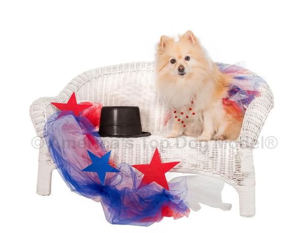 Meet America's Top Dog Model 2016 Winner