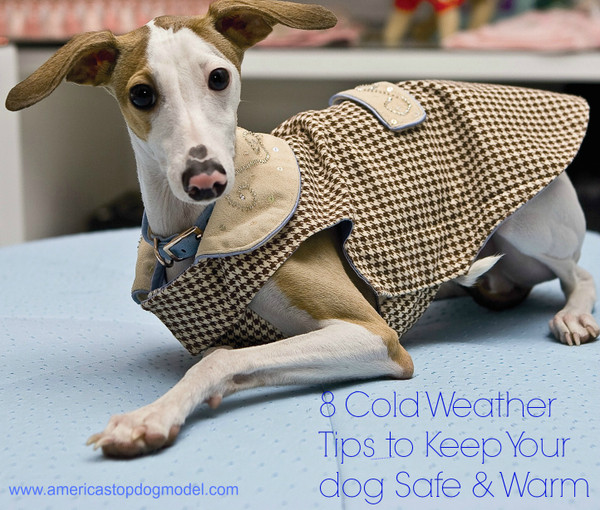 8 Cold Weather Tips to Keep Your Dog Safe and Warm