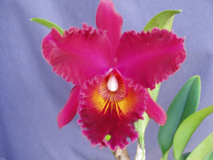 Rlc. Chia Lin 'New City'