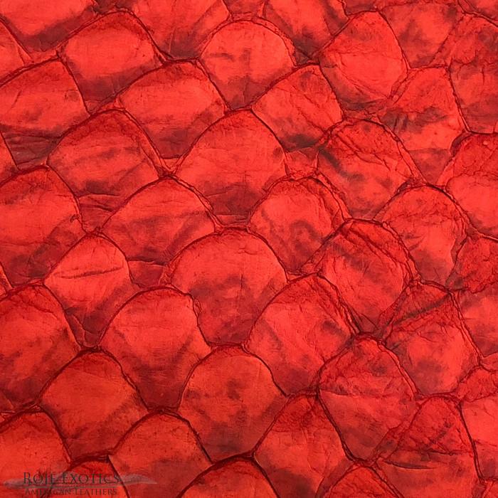 Pirarucu ( Arapaima)  Red Matte -  XL