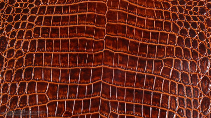 Nile Crocodile Belly -  Red Brown Two Tone