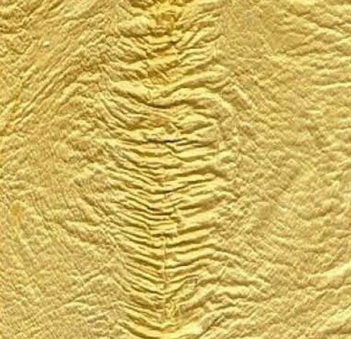 Genuine Eel Skin Panel - Lemon