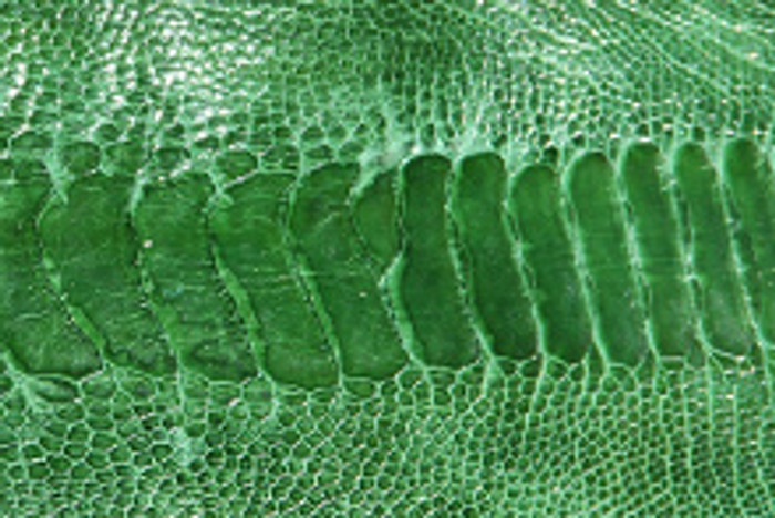 Genuine Ostrich Leg  - Glazed Finish in Kelly Green