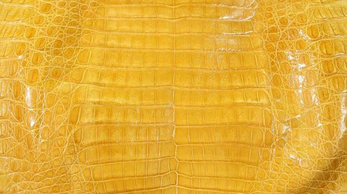 Caiman Belly Skin - Glazed - Canary Yellow (38cm)