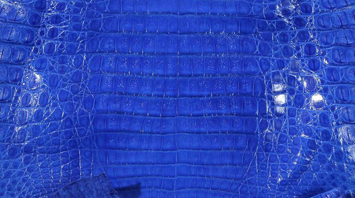 Caiman Belly Skin - Glazed - Electric Blue (38cm)