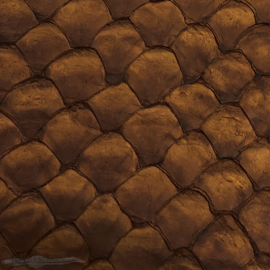 Pirarucu ( Arapaima)  Chocolate Matte -  XL