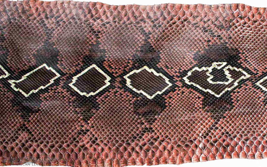 Python Front Cut  - HandPainted - (17B10-A)
