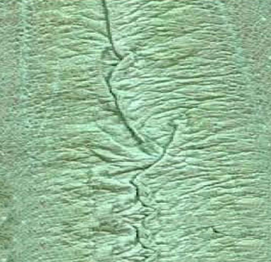 Genuine Eel Skin Panel - Pistachio