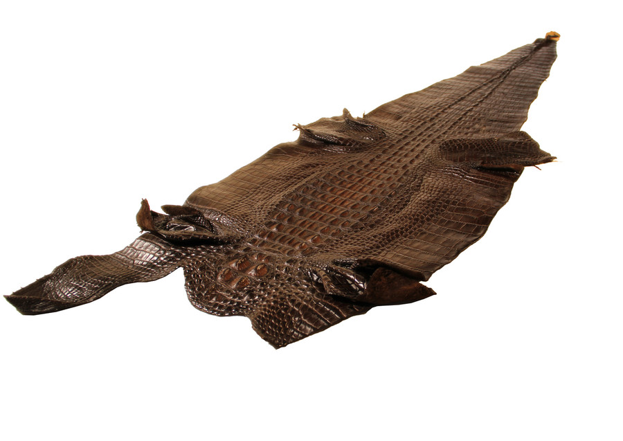 American Alligator Hornback - Dark Brown Waxy Millennium 40-44cm
