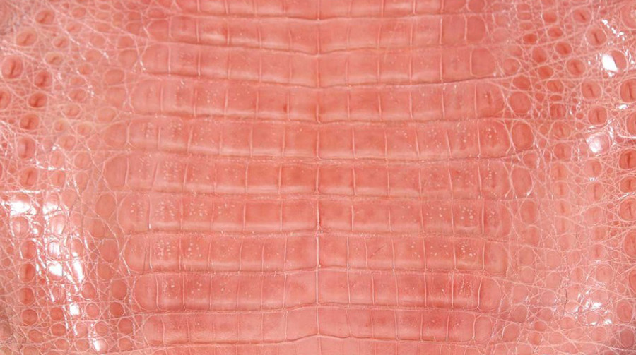 Caiman Belly Skin - Glazed - Indian Pink (38cm)