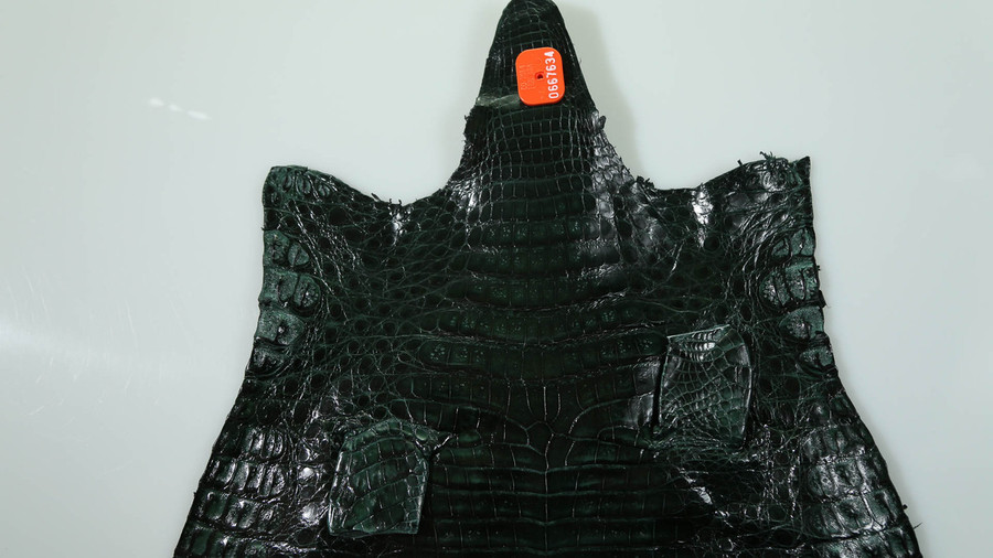 Caiman Belly Skin - Glazed - Forest Green (38 cm)