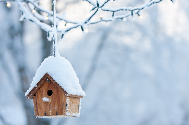Winter-proofing Your Birdhouse