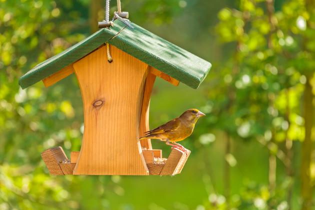 Bird Friendly Backyard Projects