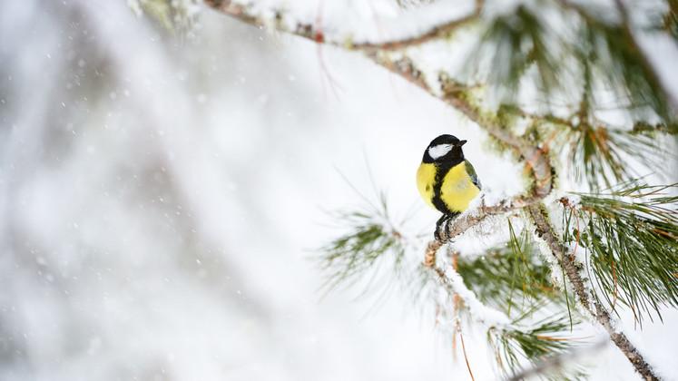 Bird Friendly Winter Gardens