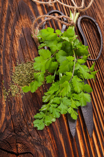 Cilantro and Roasted Onion (Infused) Olive Oil