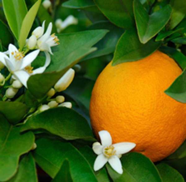 Neroli  3% | ESSENTIAL OIL