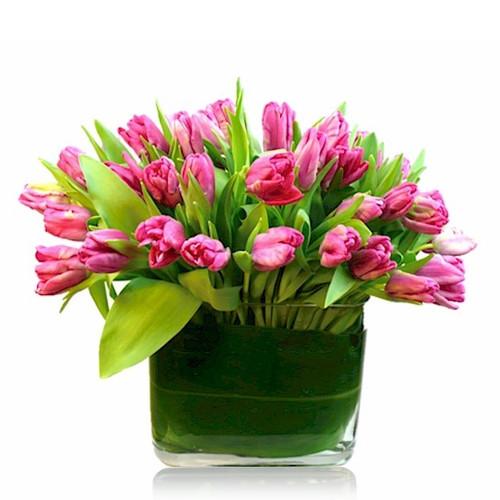 Tulip Lover