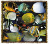 Tropical Fish Tapestry Coverlet or Throw MS-5076TU4