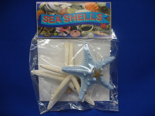 Starfish Assortment with Header