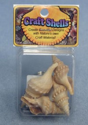 Turris  Seashells- Craft Pack