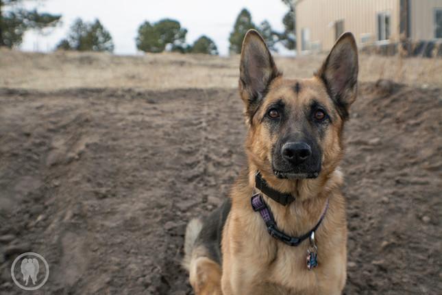 Saving a Dog's Life