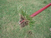 WEED1-M - Turf-Tec WeedAway Weed Removal Tool - remove weed from turf