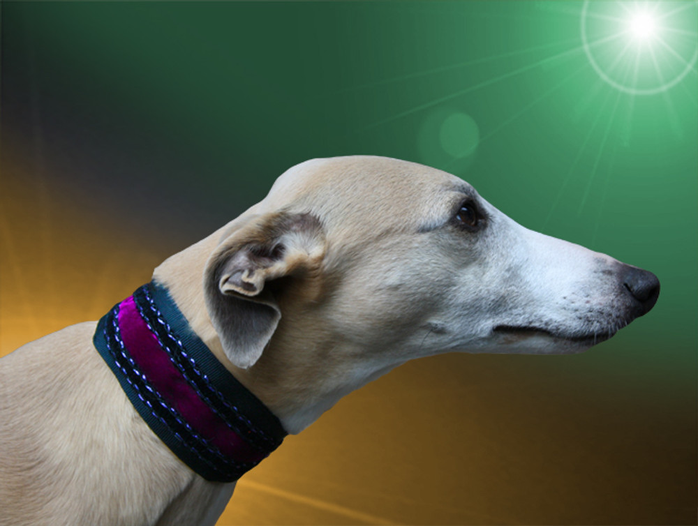 Adored A Knights Tale Whippet Collar