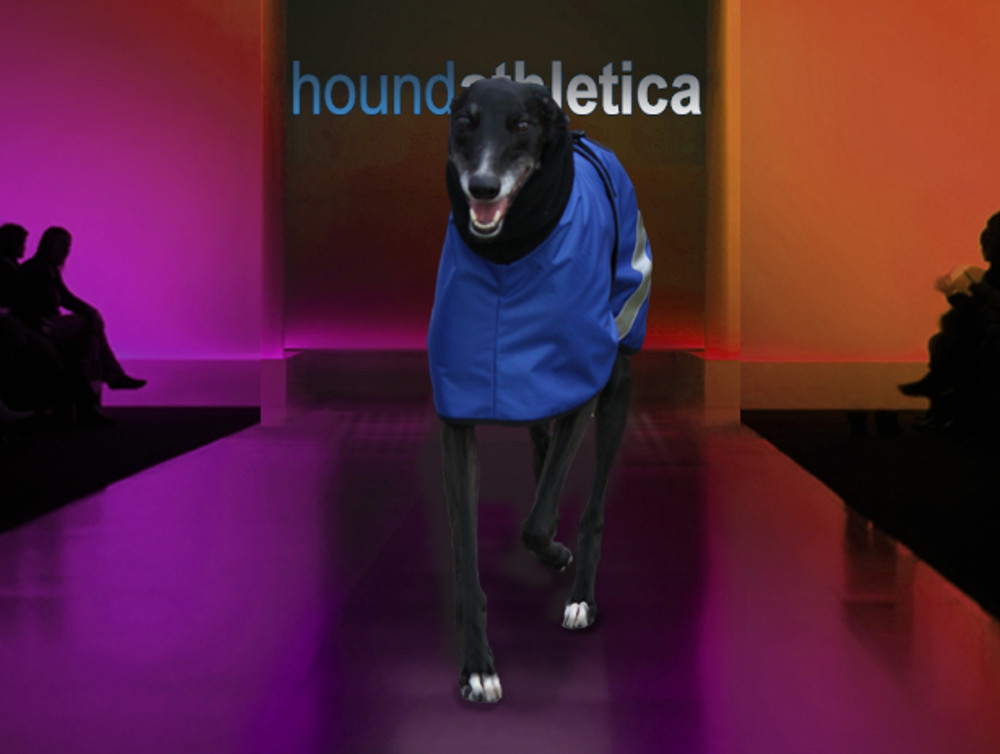 greyhound coat