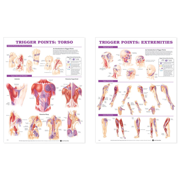 TRIGGER POINT CHART SET, LAMINATED