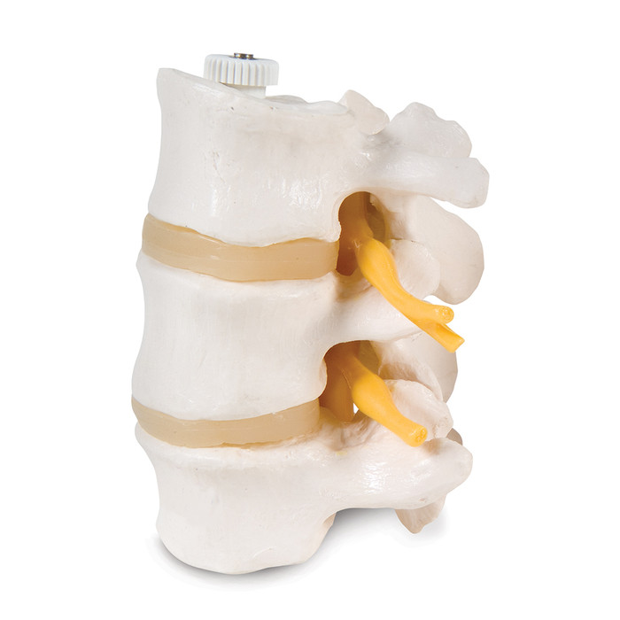 3 LUMBAR VERTEBRAE MODEL, FLEXIBLY MOUNTED