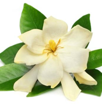 Vegan Body Milk – Gardenia, Cardamom & Coconut 2oz