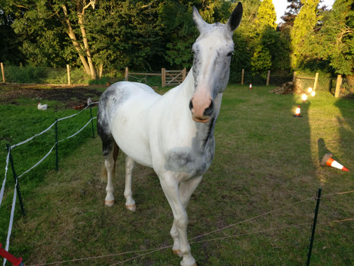 Diary of a Hunting Newcomer (Part 5): Buying The Horse