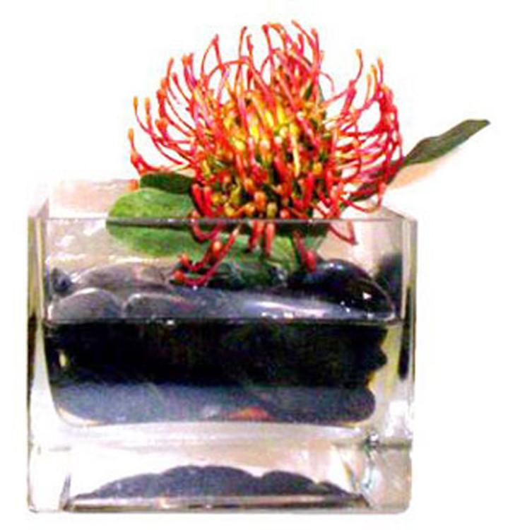Protea in Rocks