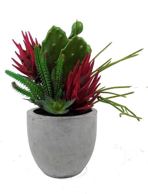 Mixed cactus garden
