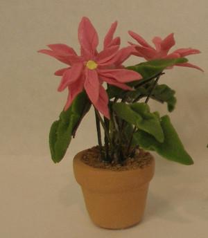 2150 - Plant:  Poinsettia - Pink